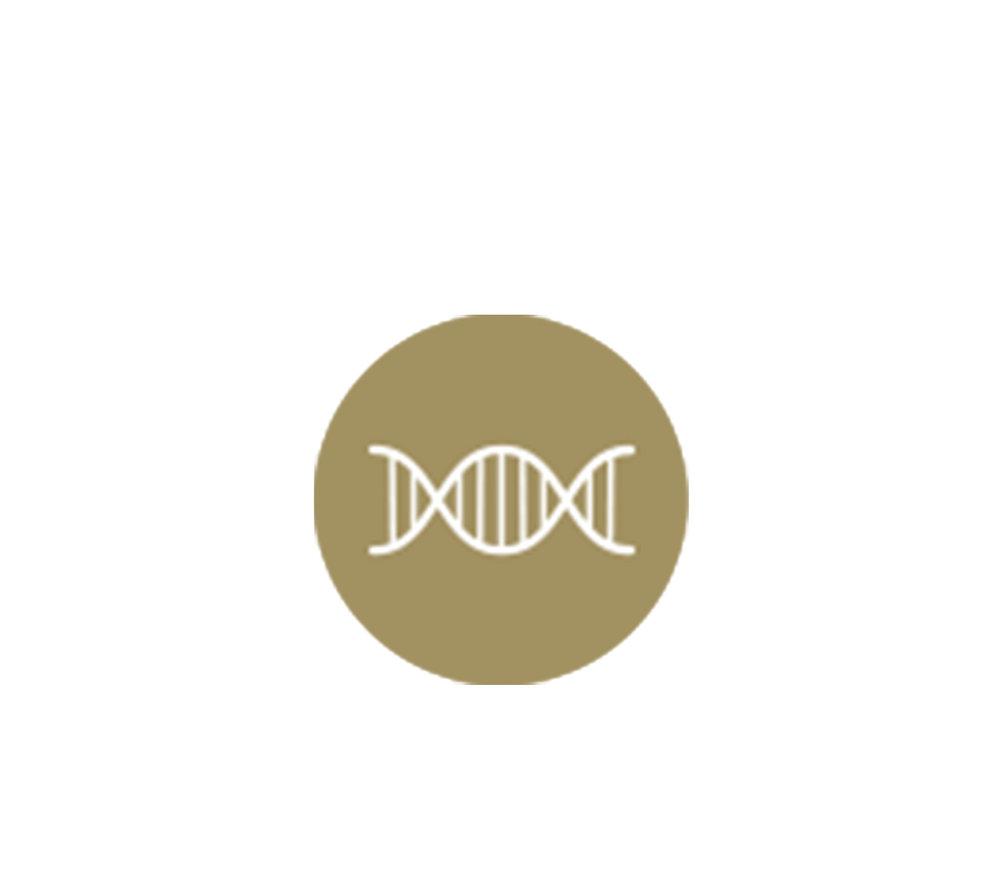 - Käytämme solubiologian periaatteita antamalla keholle elementit, jotka mahdollistavat sen sujuvan toiminnan.