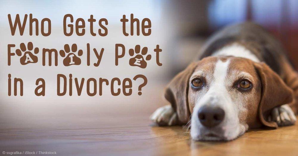 family-pet-divorce-fb.jpg