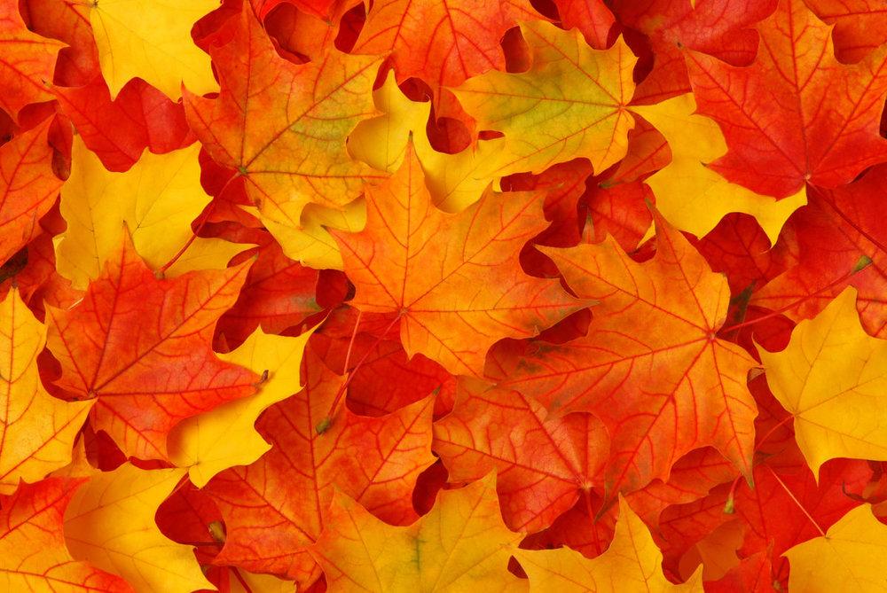 bigstock-Fall-leaves-14340998.jpg