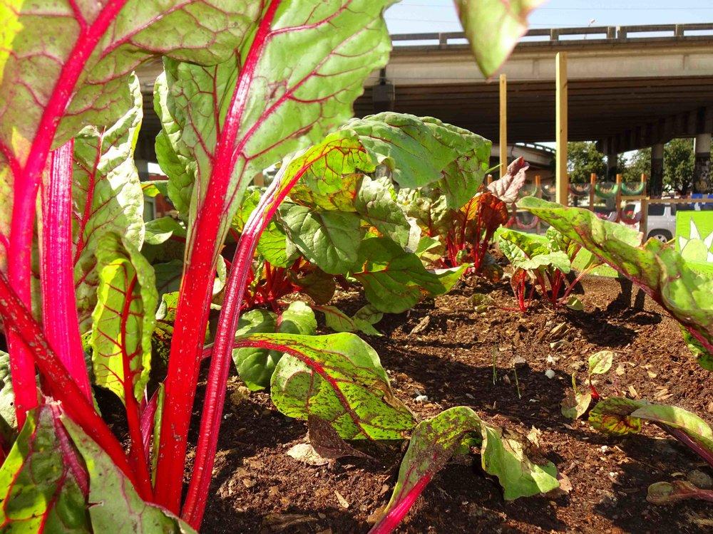glorias_treme-garden-new-orleans-4.jpg
