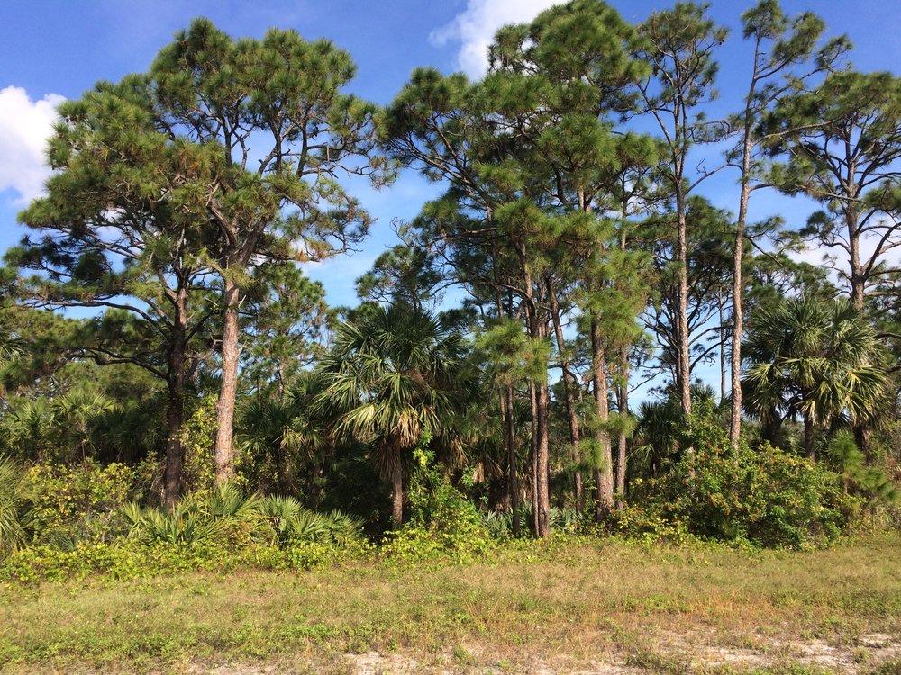 Oakmont Preserve Lot 16 - 2582 Westhorpe Dr Malabar FL 32950