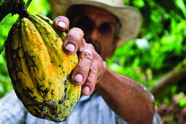 cocoa-452911_640[2].jpg