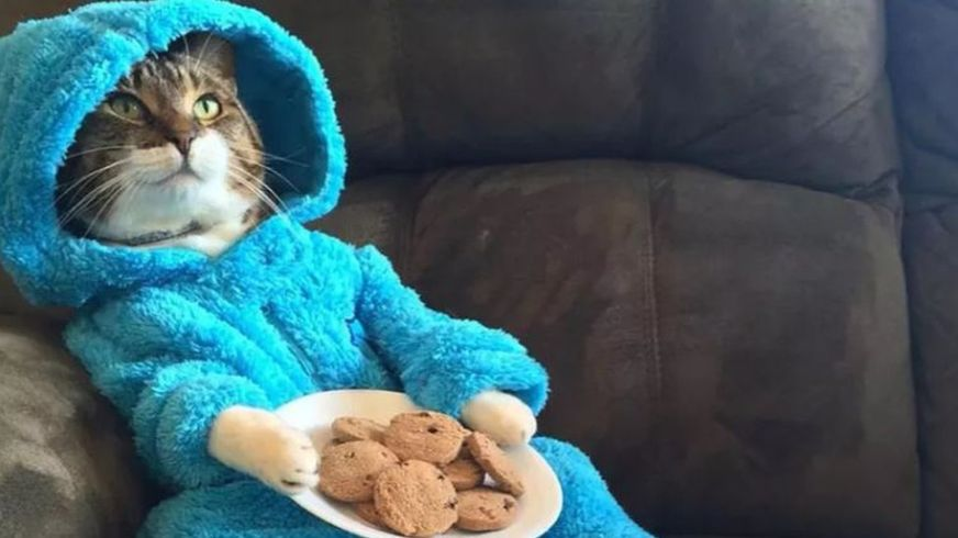 """Photo Courtesy of BBC. This picture was included in the invitation email for the """"cat pajama party."""""""