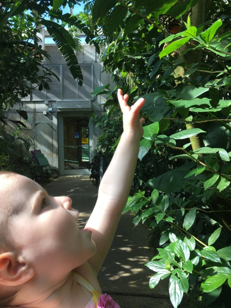 S at one our favorite NC local places for a family day: the Museum of Life and Science in Durham.