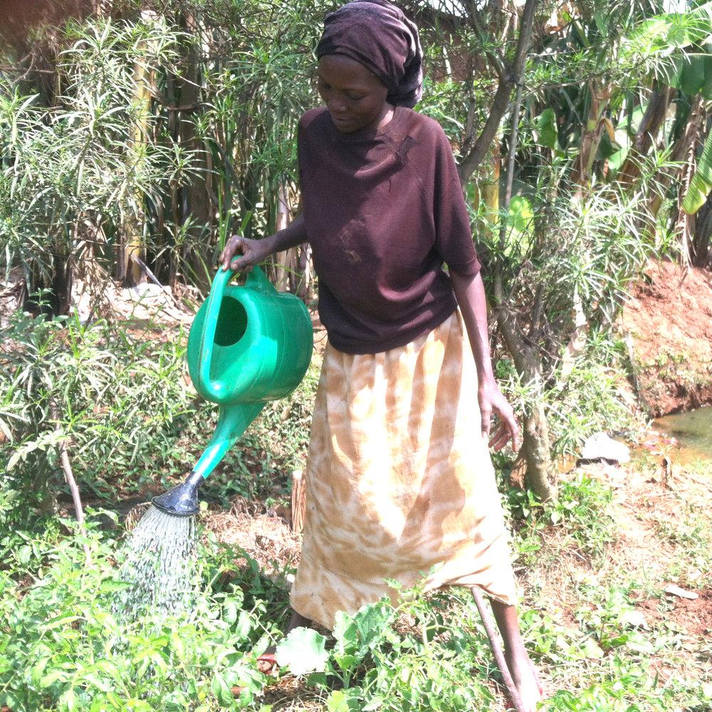 awamu.co.uk organic gardens kampala uganda