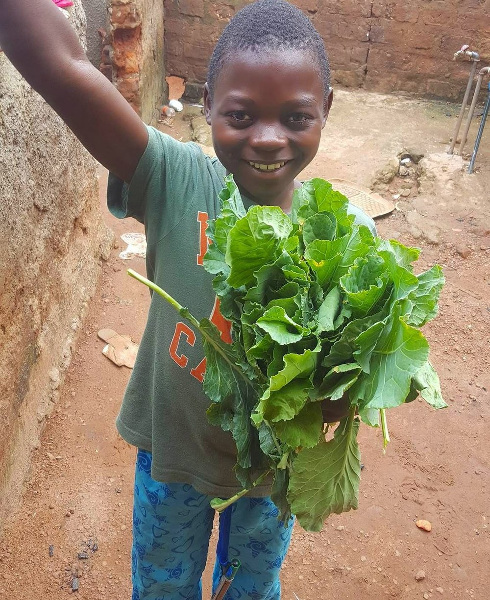 Fahad in charge of the Sukuma Wiki harvest.