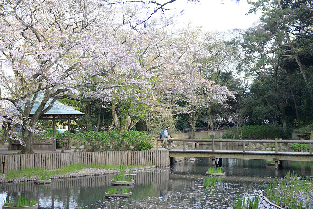 IzumoTaisha_shrine_04.JPG