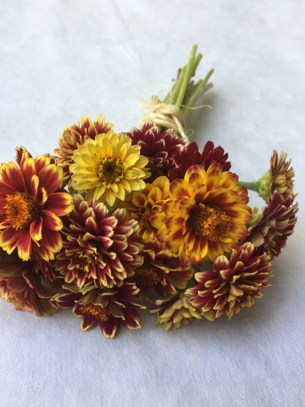 Jazzy Mix Zinnia