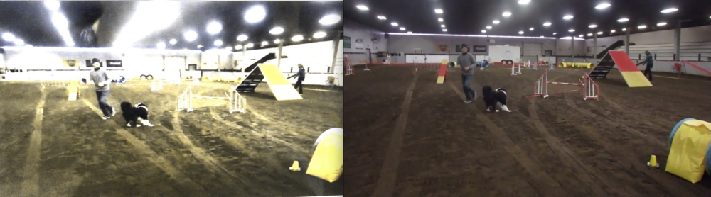 Indoors: White walls, brown dirt. Dog's Eye View of dirt is Yellow. The red contacts appear solid yellow.  The Yellow contact zone at the end of the teeter disappears under the lights with a white wall in the distance.  The red markings on the bars blend in with the footing. The judge is very visible wearing darker colours.