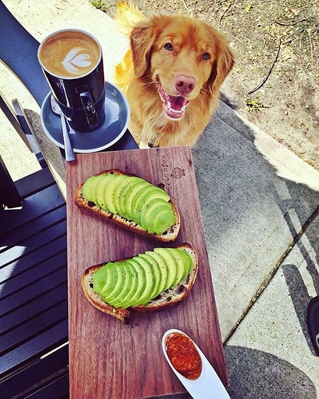 Fun for the whole family! 🥑🐶