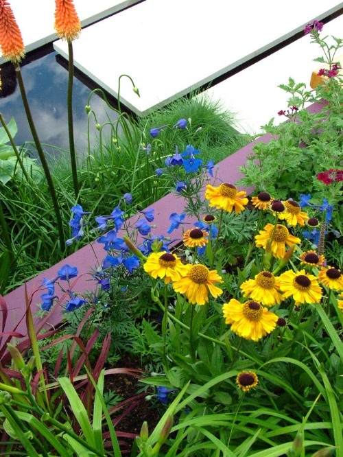 yellow-blue-flowers.jpg