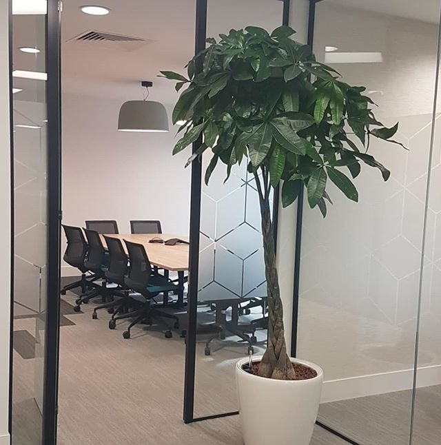 Great to end to the week dropping in to revisit Clarion. It's a shame we couldn't see it fully occupied but the plants really bring it to life #makingworklive #workplacedesign #happyclient #fridayfeeling #interiordesign #interioroffice #completedproject #plants