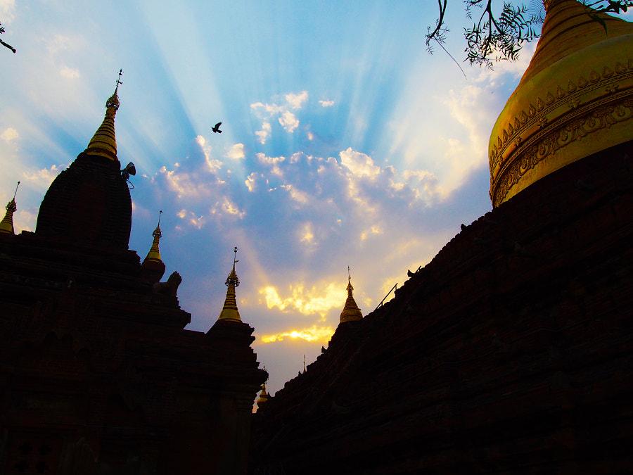 Bird Over Bagan