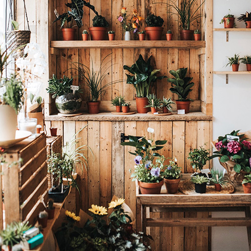 FlowerShop_PoppyScout.jpg