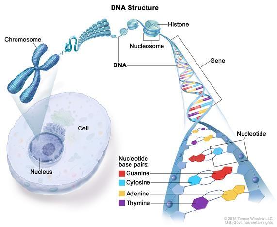 Human Genome editing.jpg