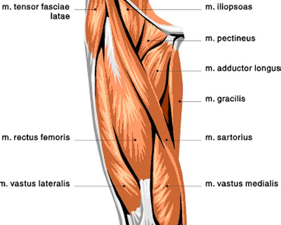 BIOMECHANICS APPLIED TO LEG TRAINING