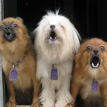 Fearful Dogs Barking