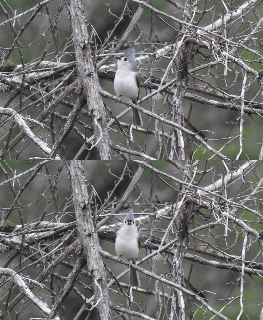 More titmouse :)
