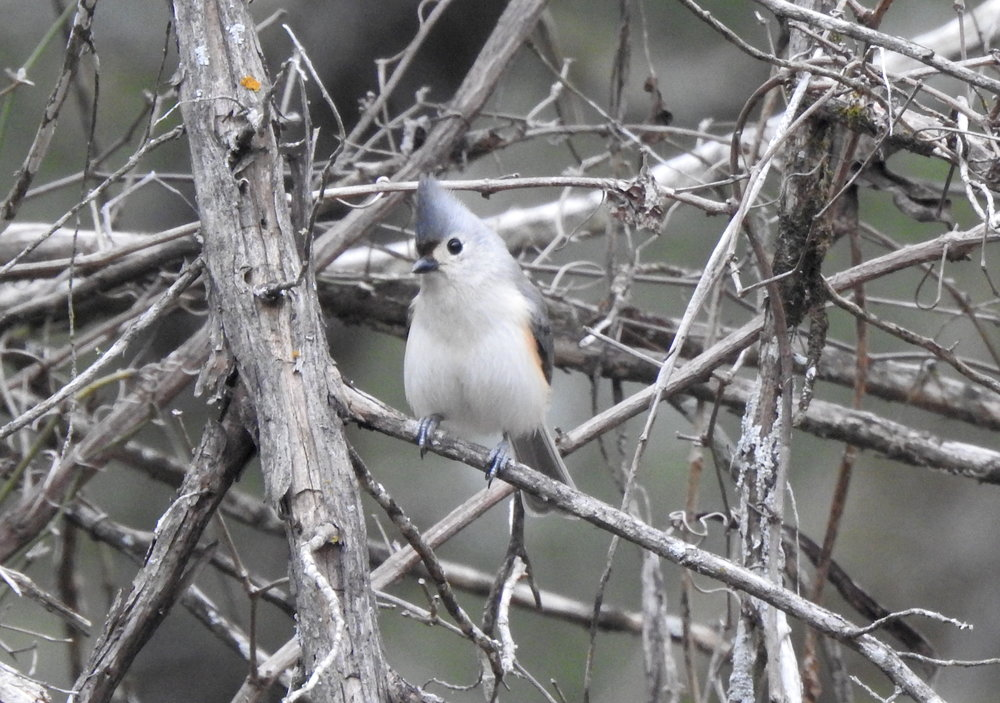 2018 Lost Pines Christmas Bird Count - McKinney Roughs Nature Park, Cedar Creek, TXDecember 29, 2018