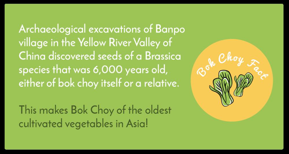 Bok Choy Fact1.png