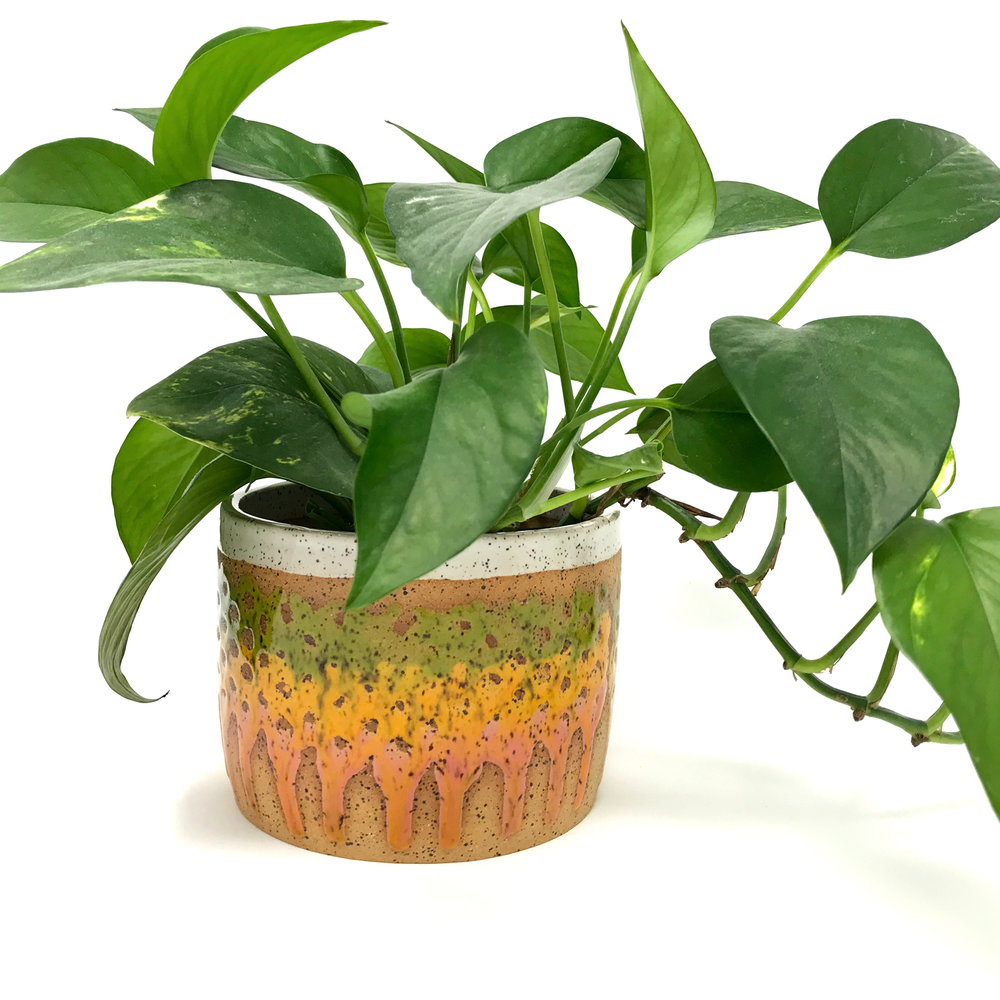 mosswithplant.jpg