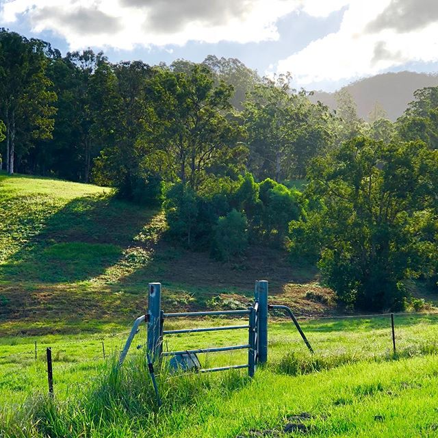 Autumn is emerald in Queensland, we've had a lot of rain! #autumn #queensland #australia #green #sunshine #fields
