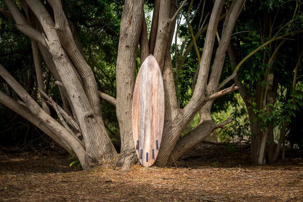 Agave Surf