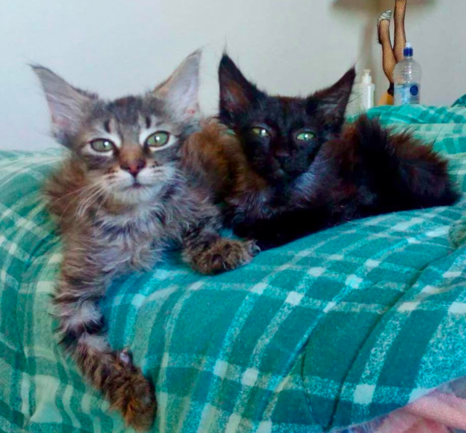 We're all ears! - Keep listening for more about these two gorgeous girls who will be ready for adoption soon!