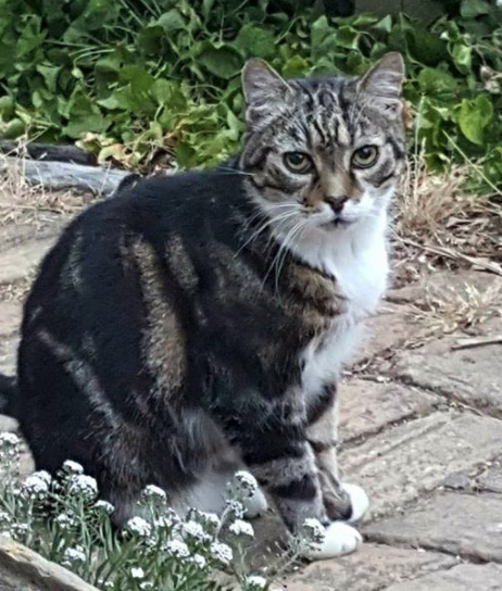 17-year old  Brutas  took off after his tea on June 4th from  Wharf Road . Please keep a look out for this handsome old guy.