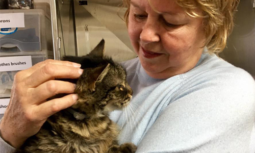 Does WISCA have a no-kill policy? - WISCA is a Pro Life Shelter. this means that we will not euthanise any animal unless it is deemed by a vet to be suffering. Once we accept an animal into our care, we see it through to an adoption.