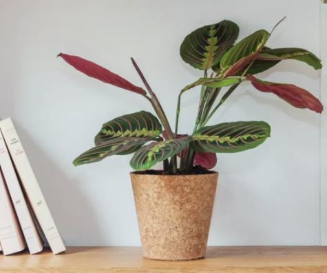 Invincible_Plant _Pot_Cork_MEG