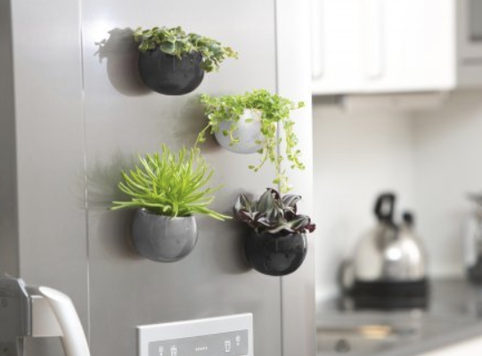 Invincible Magnetic Plant Pot Succulent and Cacti