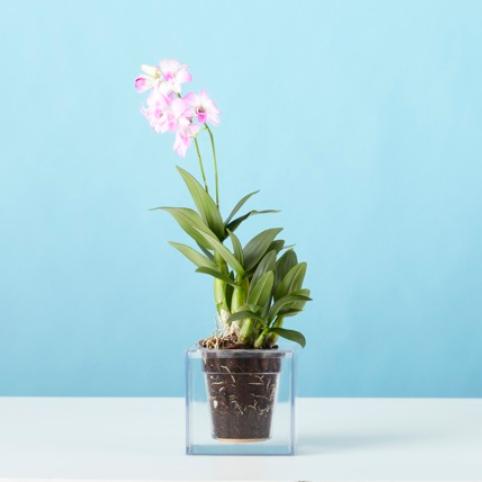 Invincible_Self_Watering_Plant_Pot_Boskke