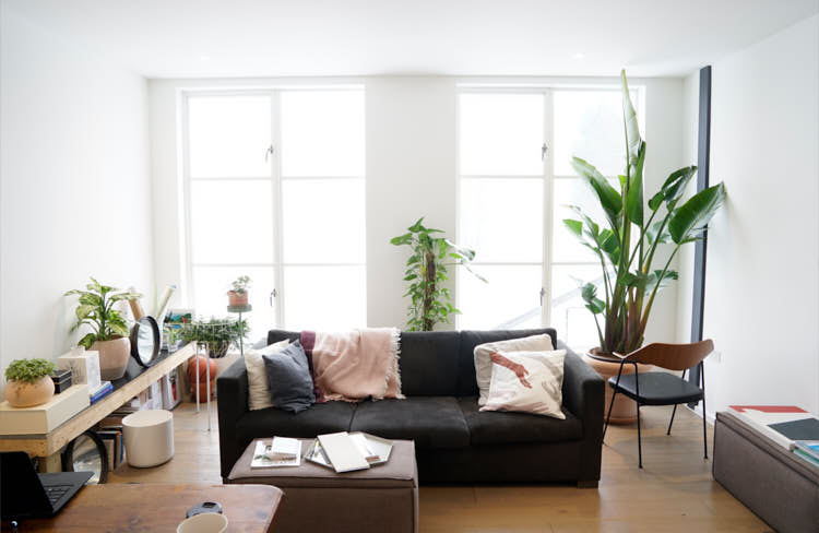best indoor plant care tips the house plant urban jungle blog