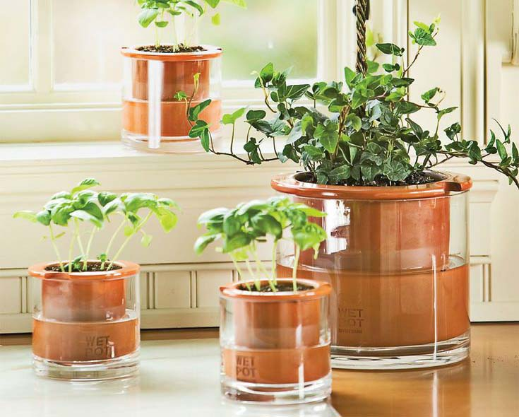 DID SOMEONE SAY SELF-WATERING ?! - Self-watering plant pots,or the end of plant-killing. I think they can help many of you, just like they did to me!