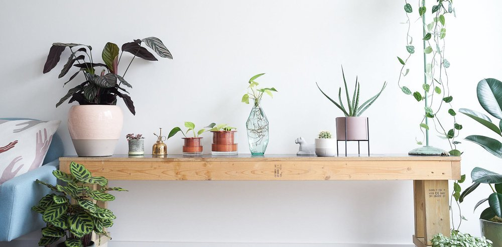 healthy plants - happy homes