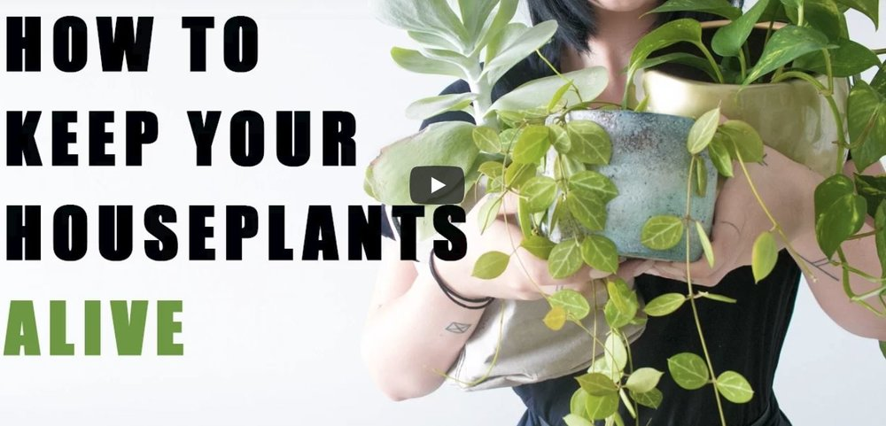 tips-how-to-keep-houseplants-alive.JPG