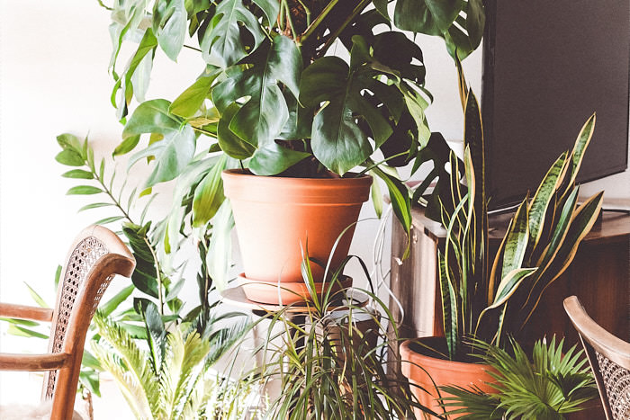 Easy and durable houseplants for beginners. If you are busy or don't have a green thumb, these plants won't let you down.