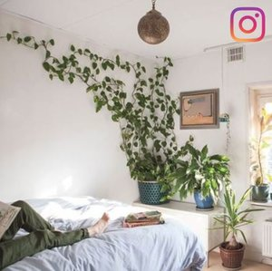 30 Plant Instagram Accounts For Decor Inspiration In 2019
