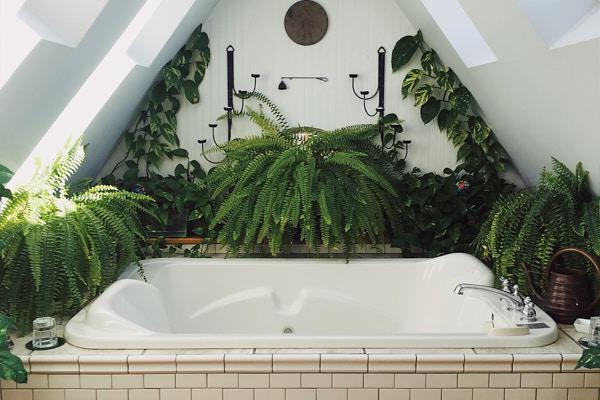 plants-that-thrive-in-the-bathroom.jpg