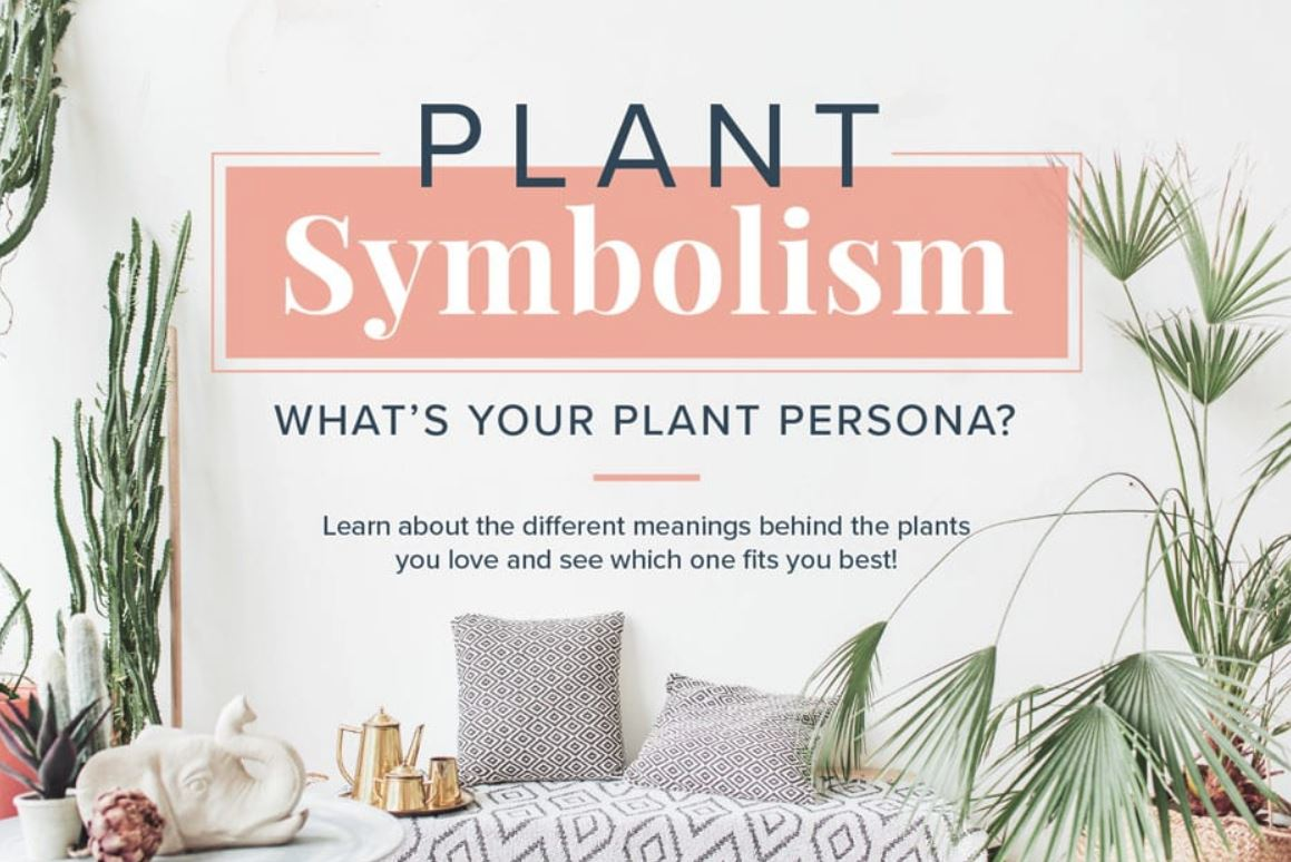 Plant Symbolism What S Your Plant Persona The Houseplant