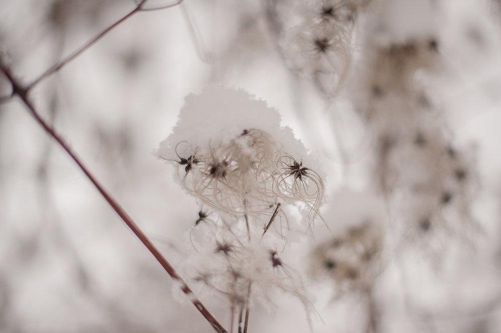 bpp-winterwonderland-001.jpg