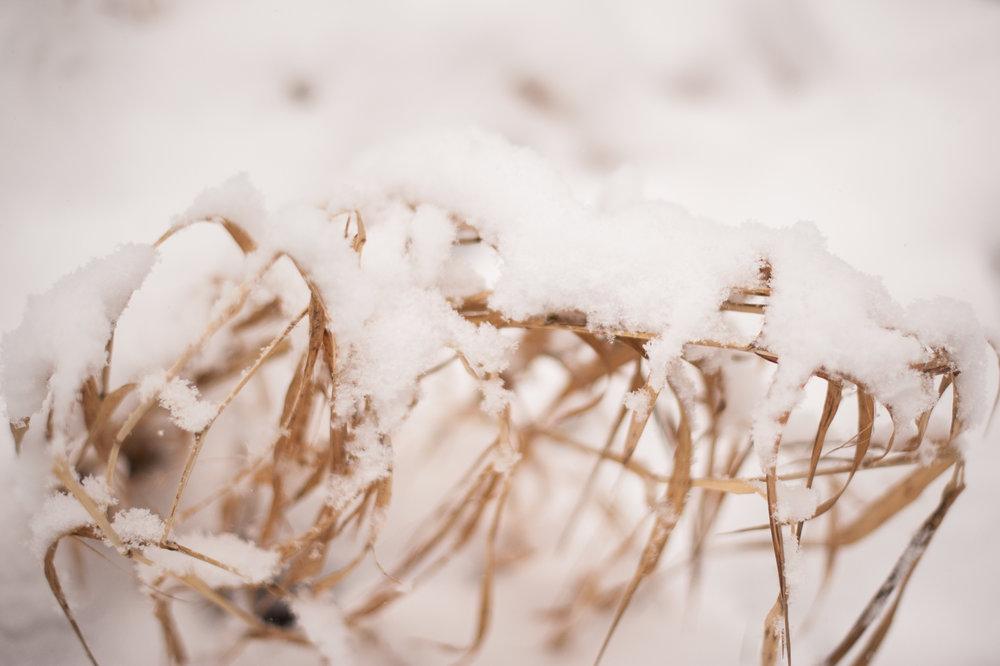 bpp-winterwonderland-006.jpg