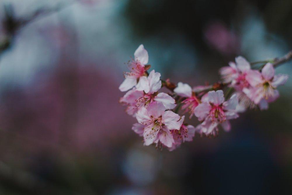 4k-wallpaper-beautiful-bloom-1827399.jpg