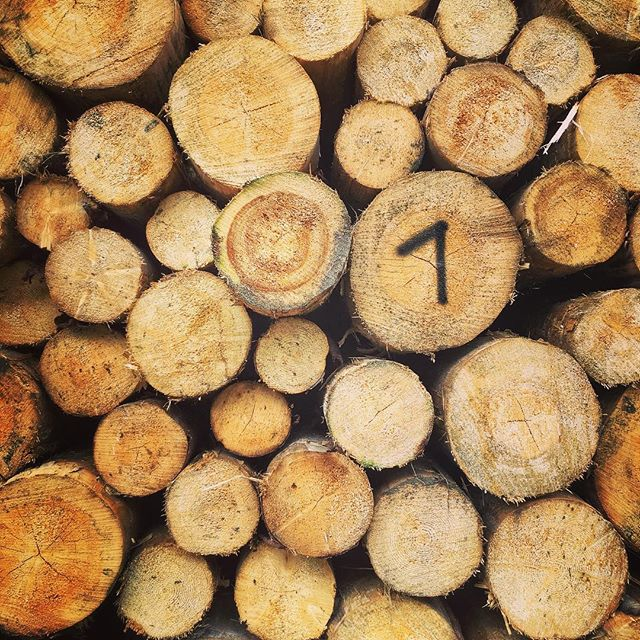 One #one #wood #circles #trees