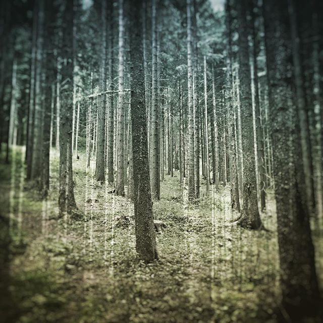 Double exposure #wood #forrest #trees