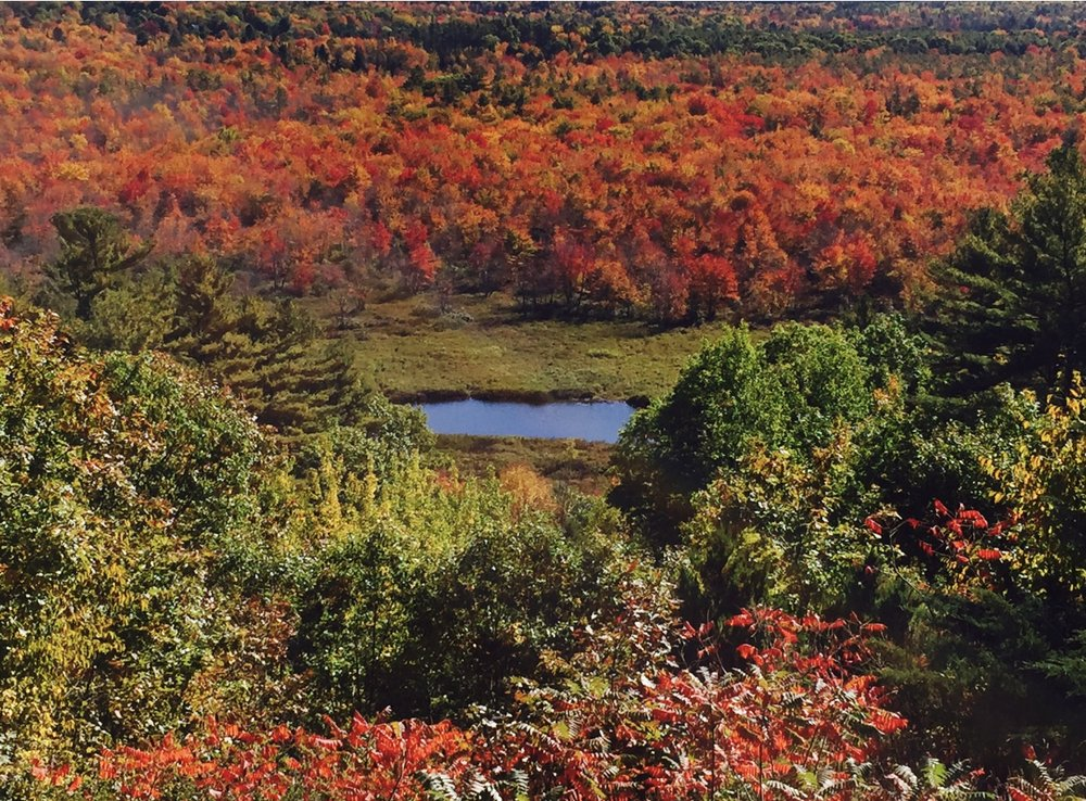 Fall Foliage View.JPG