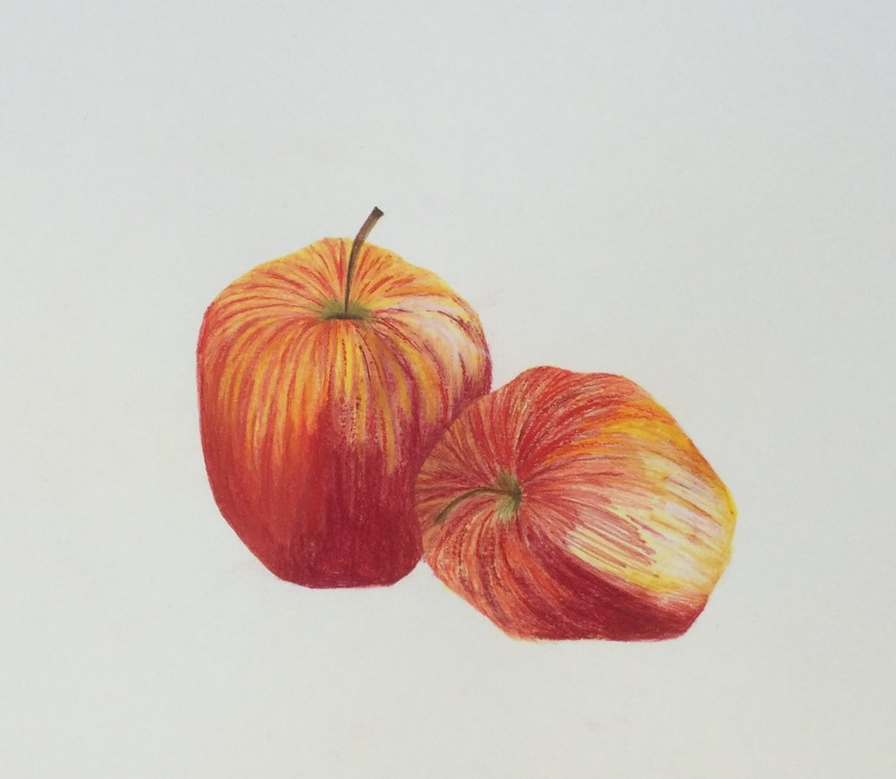 Apple illustration by Briony Dixon