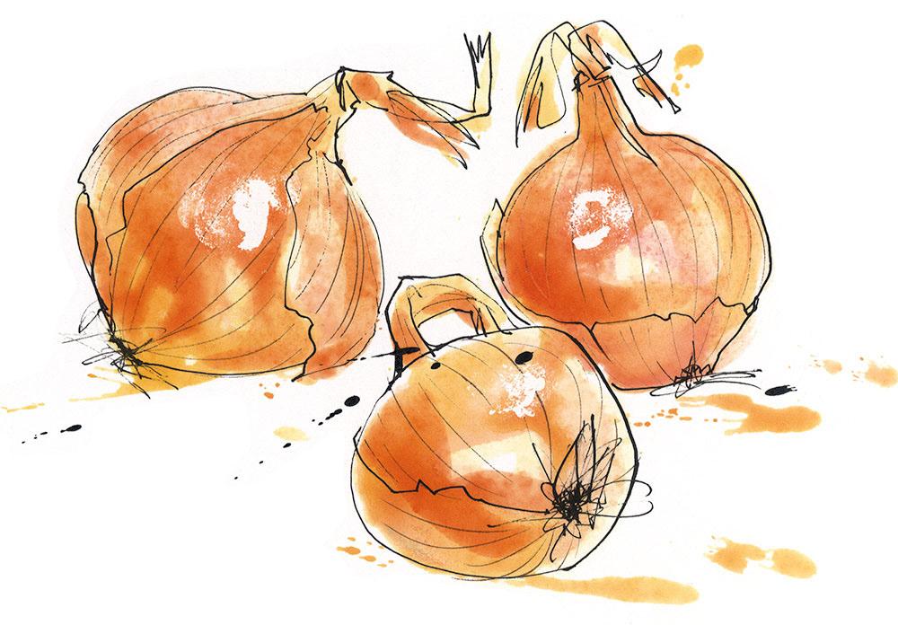 Louise Morgan onions.jpg