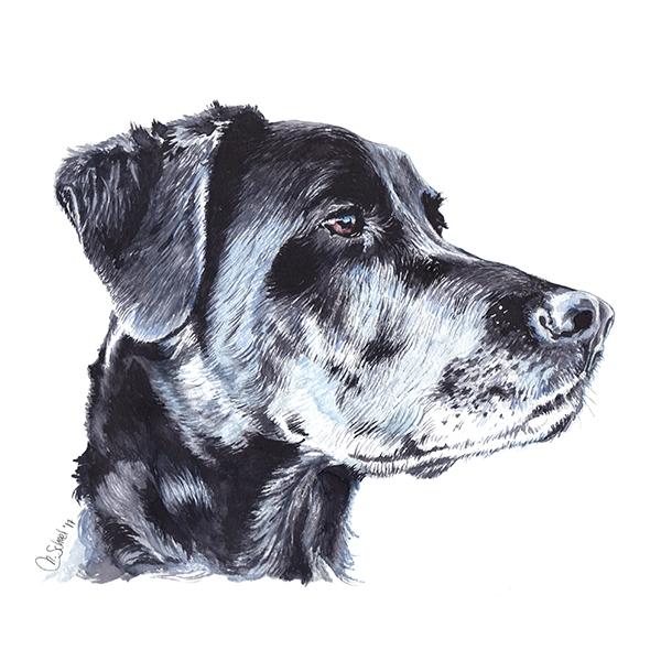 black_dog.jpg